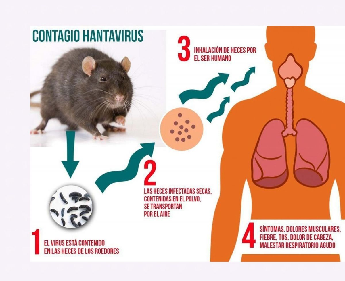 Foto noticia OSPeCon - Hantavirus